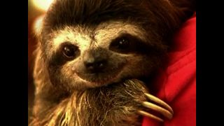 Sloth Sanctuary - Video