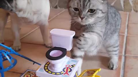 Angry Pug Accuses Cat Of Cheating During A Board Game