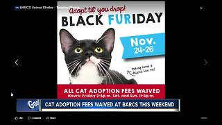 BARCS waiving cat adoption fees Black Friday weekend - Video