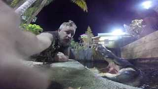 Man Serenades Chomper The Giant Alligator - Video