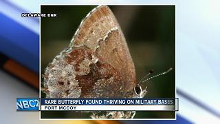 Rare butterfly thrives on, and because of, US military bases - Video