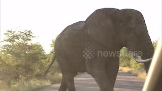 Elephant won't let tourists vehicle pass - Video