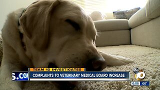 Complaints to the State Veterinary Medical Board increase