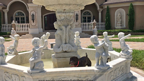Funny dog turns water fountain into personal pool time