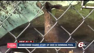 Indianapolis firefighters rescue deer trapped in pool - Video
