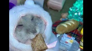 Hamster Enjoys a Little Rest and Relaxation Before the Holidays - Video