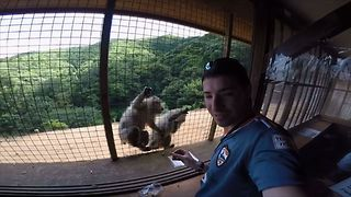 Greedy Monkey Knocks Over Friend For More Food - Video