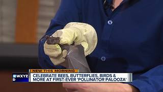 A couple special guests join us in studio to promote the first-ever 'Pollinator Palooza' event - Video