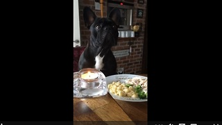 Clever French Bulldog not duped into eating broccoli - Video