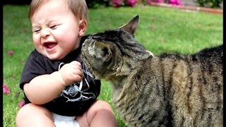 Cat: Cat And Baby Funny Video Compilation #2 | Funniest cats Videos Compilation |Funny Videos