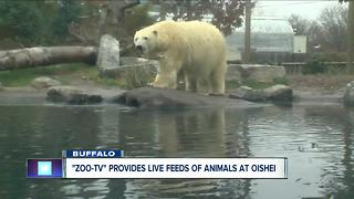 Zoo-TV provides live feeds for kids in OCH - Video