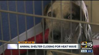 Arizona Animal Welfare League shutting down shelter due to heat