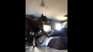 Dog has heart-breaking reaction when owner pretends to die