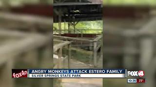 Angry Monkeys Attack Estero Family - Video