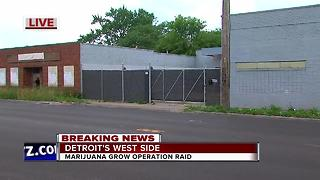 Police bust marijuana grow operation in Detroit - Video