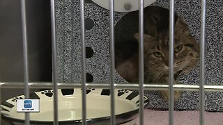 65 cats removed from a Green Bay homeCIETY.