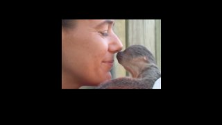 Baby Sloth at Brevard Zoo Shows Zookeeper Some 'Eyebrow Love' - Video