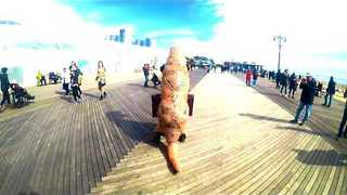 Man in T-Rex Costume Takes to Coney Island Boardwalk - Video