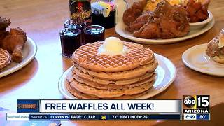 Free waffles for National Waffle Day at Lolo's Chicken and Waffles - Video