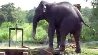 Dramatic Rescue Of Elephant From Canal Using Firecrackers And Ropes In Sri Lanka - Video