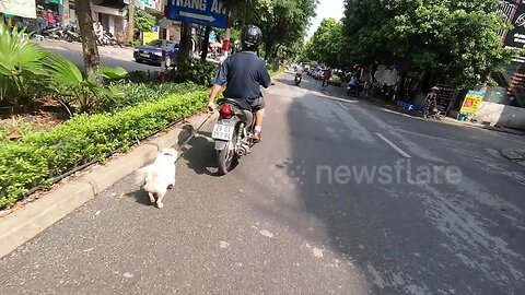 Poor pet dog dragged on high-speed run by man on a motorbike in Vietnam