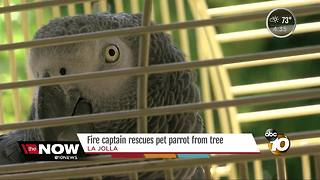 San Diego Fire captain rescues pet parrot from tree - Video
