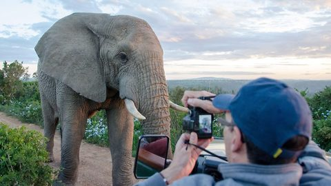 Norwegian Tourist Gets Up Close With An Elephant in South Africa
