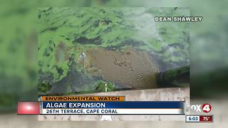 Testing the algae in Cape Coral - Video