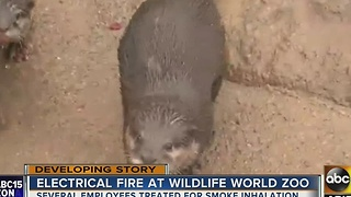 Trio of otters safe thanks to their keepers after fire - Video