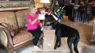 Happy Great Dane Enjoys Birthday Cake Ice Cream Gifts from You Tube Friend  - Video