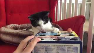 Genius Adapts 'Whac-A-Mole' Game for Cats - Video