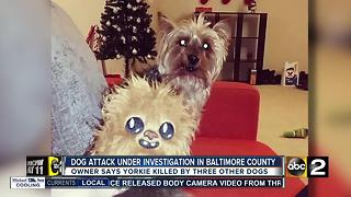 Dog attack under investigation in Baltimore County - Video