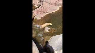 Dog enjoying waterfall gets stuck and pulled out by owner