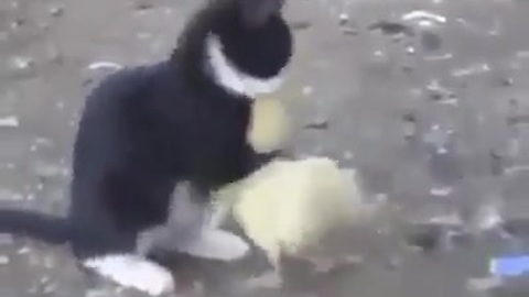 Cat and duck are truly best friends