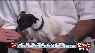 Dr. Joe visits midday to answer your pet health questions - Video