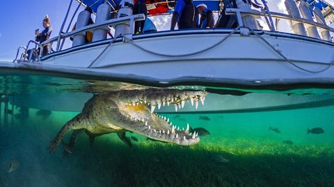 Crocs show off pearly whites to daring diver in stunning underwater snaps