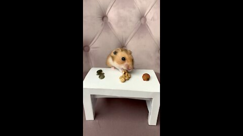 Tiny dinner time with tiny little hamster is just so precious