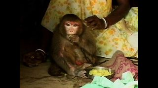 Woman Adopts Monkey - Video