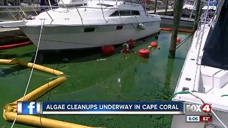 Algae clean-up underway in Cape Coral - Video