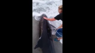 Pygmy killer whale stranded off US coast - Video