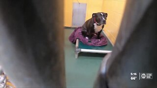 More pets being surrendered due to pandemic