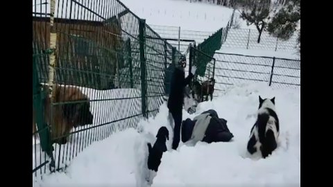 Dogs Dig Through Heavy Snow at Austrian Animal Shelter