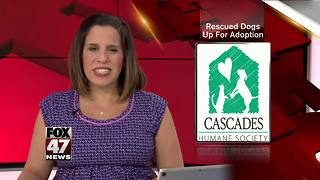 Pups rescued from puppy mill ready for adoption - Video