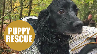 A cocker spaniel had a lucky escape after being resuced from a 100ft mine shaft - Video