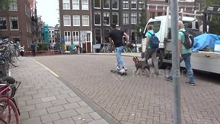 Dog takes skateboarding man for a walk in Amsterdam - Video