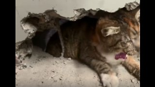 Rescuers Use Drill to Free Cat Trapped Between Two Factory Walls