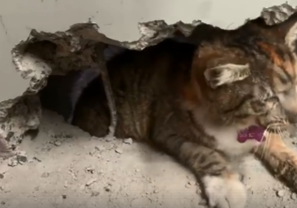 Watch Rescuer Drills Through Wall To Free Trapped Cat Upi Com