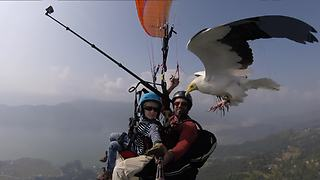 Vulture Joins Father And Son On Paragliding Adventure - Video