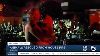 Numerous animals rescued from El Cajon house fire