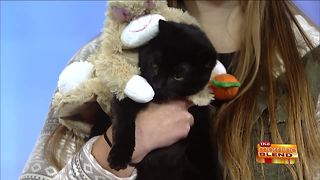 HAWS Annual Critter Costume Show - Video